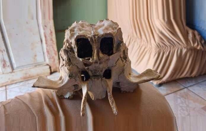 Crânio de ET? Estranha cabeça encontrada em fazenda deixa população desconfiada